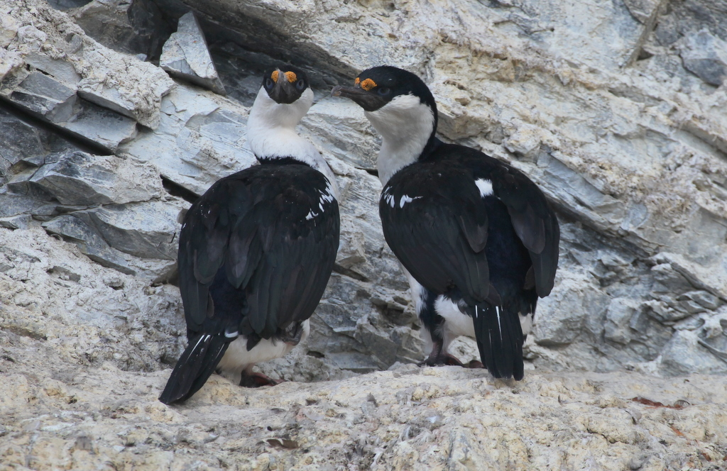 Birdlife in the Antarctic